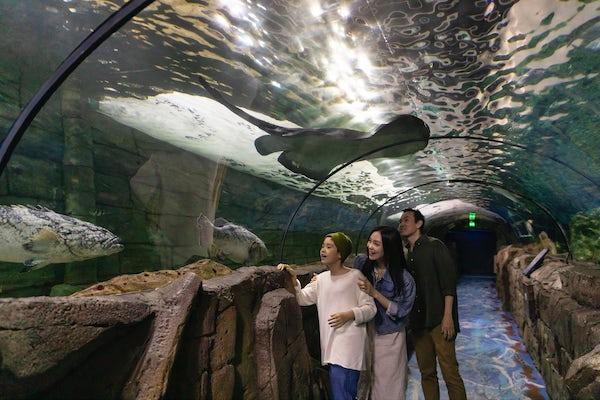 SEA LIFE Sydney Aquarium, Darling Harbour