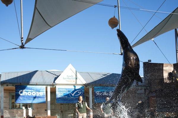 Family enjoying the seal show at Taronga Zoo